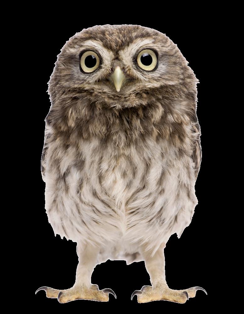 Owl-Athene-Noctua.png